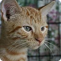 Adopt A Pet :: Alex - Frederick, MD