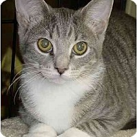 Adopt A Pet :: Bella - Chesapeake, VA