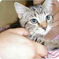 Adopt A Pet :: Simba - Proctor, MN