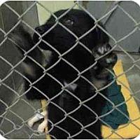 Adopt A Pet :: Emma - BC Wide, BC