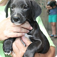 Adopt A Pet :: Raylen - kennebunkport, ME