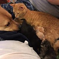 Adopt A Pet :: Mimi - Fairborn, OH