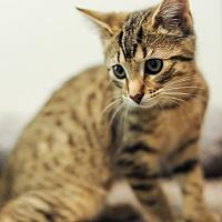 Adopt A Pet :: Marisol - Mt. Prospect, IL