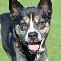 Adopt A Pet :: Mako - Hamilton, OH