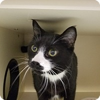 Adopt A Pet :: Sardine - Elyria, OH