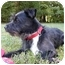 Photo 4 - Affenpinscher/Patterdale Terrier (Fell Terrier) Mix Dog for adoption in Mocksville, North Carolina - Bingo