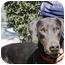 Photo 1 - Doberman Pinscher Dog for adoption in Fairfield, Texas - Hank  (Referral Dog)