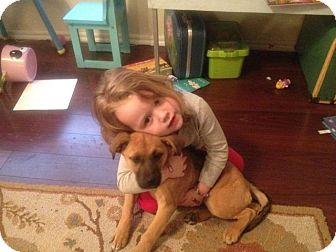 German Shepherd Dog/Affenpinscher Mix Puppy for adoption in Miami, Oklahoma - Delilah
