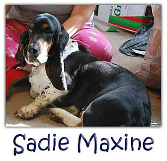 Basset Hound Mix Dog for adoption in Marietta, Georgia - Sadie Maxine