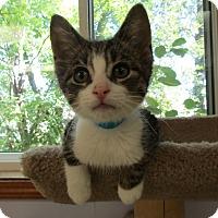 Adopt A Pet :: Dusty - Medina, OH