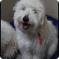 Adopt A Pet :: Georgio - Rockwall, TX