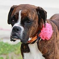 Adopt A Pet :: Riley (with Stuart Little) - Huntington Beach, CA