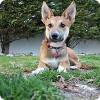 Adopt A Pet :: Piper - Shrewsbury, NJ