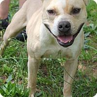 Adopt A Pet :: Leon - Decatur, GA