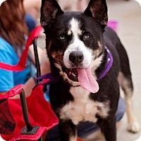 Adopt A Pet :: Newman (SPONSORED) - Springfield, MO