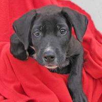 Adopt A Pet :: Angus - Woodstock, IL
