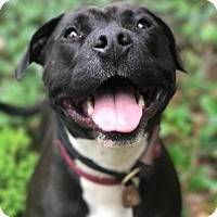 Adopt A Pet :: Luna - Eugene, OR