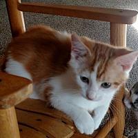 Adopt A Pet :: Snoozer and Oscar - Minneapolis, MN