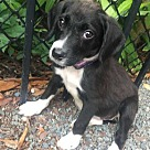 Adopt A Pet :: Abby
