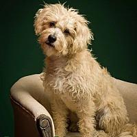 Adopt A Pet :: Liberty - MEET ME - Bedminster, NJ