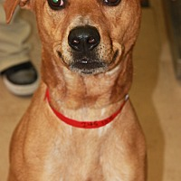 Adopt A Pet :: DR PEPPER - Clayton, NJ