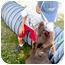 Photo 2 - Labrador Retriever Mix Dog for adoption in Sacramento, California - Kaylee SUPER URGENT