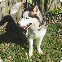 Adopt A Pet :: Max II - Jacksonville, FL