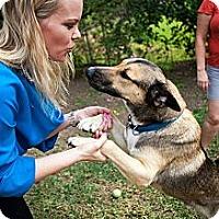 Adopt A Pet :: Buddy - Lake Worth, FL