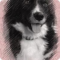 Adopt A Pet :: Pepe and 6 babies - Burr Ridge, IL
