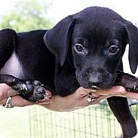 Adopt A Pet :: Eli - Glenpool, OK