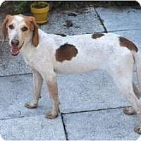 Adopt A Pet :: Angel - Minneola, FL