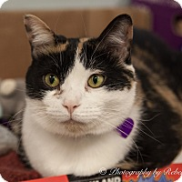 Adopt A Pet :: Smuckers - Byron Center, MI