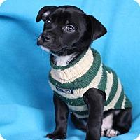 Adopt A Pet :: Everest - Minneapolis, MN