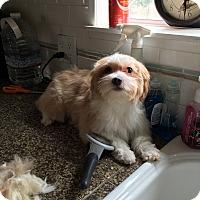 Adopt A Pet :: Heidi - Temecula, CA