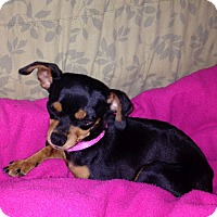 Adopt A Pet :: Maddie - Knoxville, TN