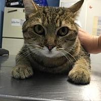 Adopt A Pet :: Kira - Roseville, CA