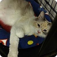 Adopt A Pet :: Birdie - Byron Center, MI