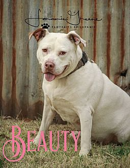 Pit Bull Terrier Mix Dog for adoption in Cheney, Kansas - Beauty