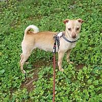 Adopt A Pet :: Sadi - Morganton, NC