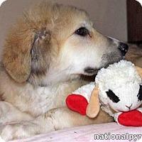Adopt A Pet :: Ellis - pending - Beacon, NY