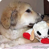 Adopt A Pet :: Ellis - new pup! - Beacon, NY