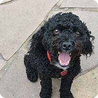 Adopt A Pet :: Jett - Denver, CO