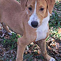 Adopt A Pet :: Pepe le Pew - Sarasota, FL