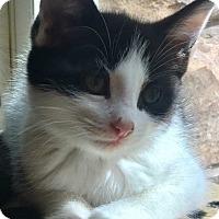 Adopt A Pet :: Cola (Fizzy is Soda Pop-Litter Mom) - Acworth, GA