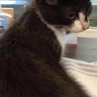 Adopt A Pet :: Sassy - Greenville, KY