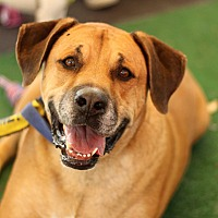 Adopt A Pet :: Shiloh - Yuba City, CA