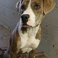 Adopt A Pet :: Trooper - Oakland, AR
