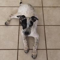Adopt A Pet :: Bandit - Tucson, AZ