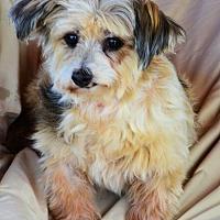 Adopt A Pet :: Esther - Pueblo, CO
