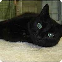 Adopt A Pet :: Bonnie - Mission, BC